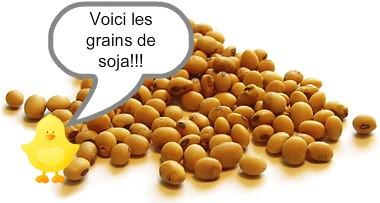 grains soja